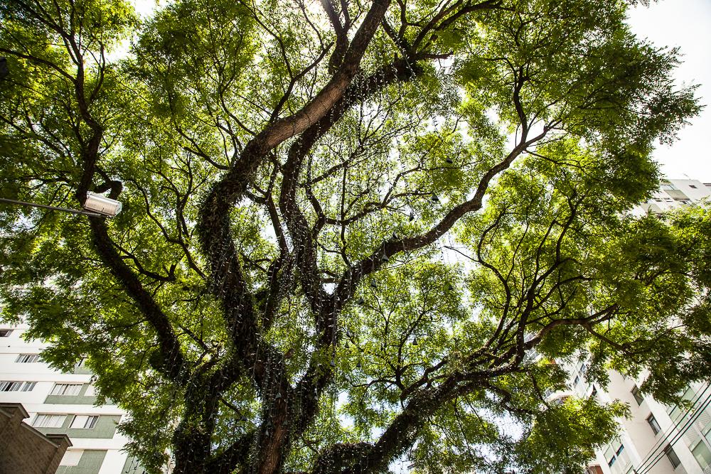 Foto árvores Moema SP