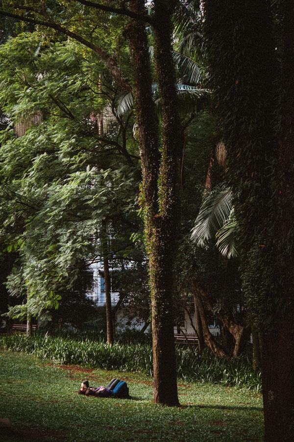 parque-bairro-higienopolis-sp